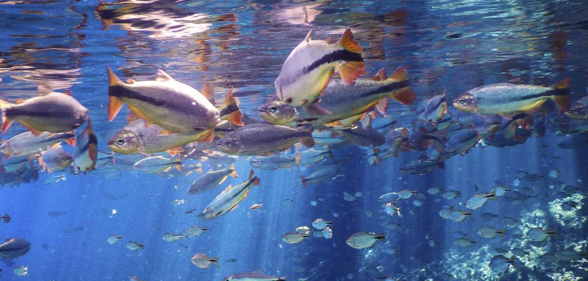 Aquafoz – O Aquário de Foz do Iguaçu